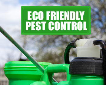 organic, eco friendly and natrual pest control solutions